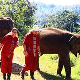 Hanging with the elephants in Thailand