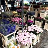 The Famous Amsterdam Flower Market