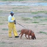 Bloodhound at Angola prison