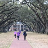 Oak lined walkway to mansion