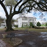 Mississippi mansion Nottoway Oak tree