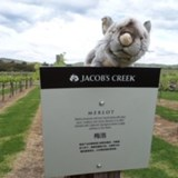 Our Possum group mascot for Corroboree West 2017