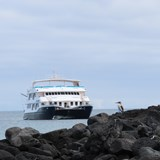 Comorant Catamaran and a blue footed booby
