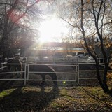 Friðheimar Tomato and Horse Farm