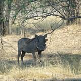 my favorite- the warthog