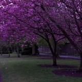 Trees in bloom near Kilkenny Castle