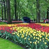 keukenhof botanical gardens, Netherlands
