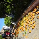 Seville, Spain oranges!!