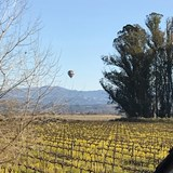 View from our house at Dutton Goldfield Winery