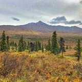 View from the Alaska Railroad near Denali