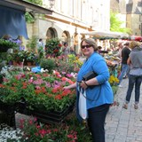 Town Center Market Day