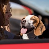 Perfect Road Trip for you and your pup!