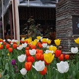 Tulip Time in Istanbul!