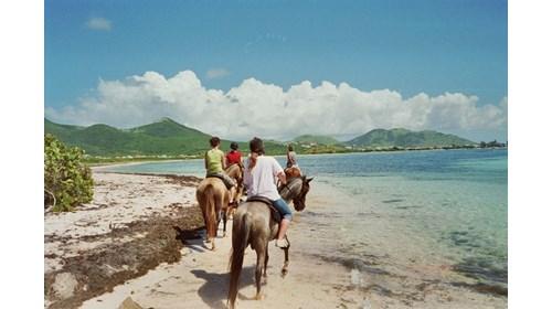 Horseback beach ride in St. Maarten