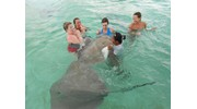 Sting rays are very curious...