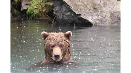 Green Sea Turtle, Akumal