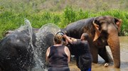 Working with rescue elephants in Thailand
