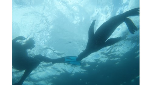That's me swimming with sea lions in Baja!