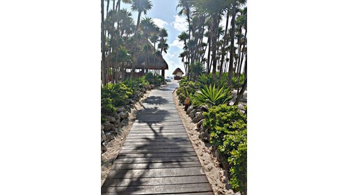 The Road to Paradise In Riviera Maya