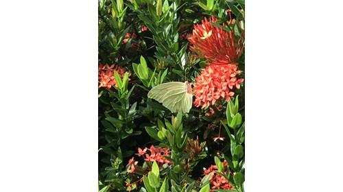#butterfly in #Guanacaste #CostaRica