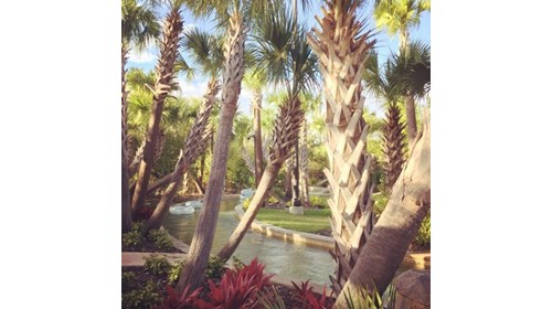 The lazy river at the Four Seasons Resort Orlando