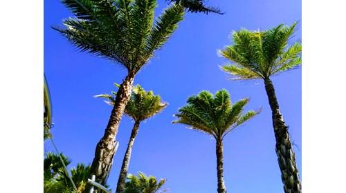 Punta Cana splendor