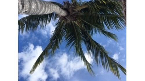 Maroma Beach Riviera Maya Mexico