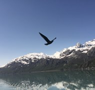 Glacier Bay, Alaska!