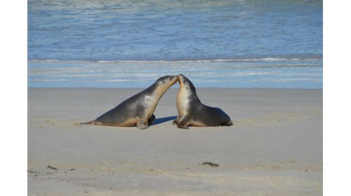 Exploring the Twelve Apostles by Helicopter