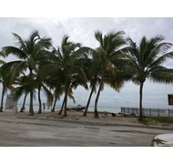 sunny beach in Key West with gorgeous palm trees-