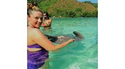 Feeding Rays in Bora Bora