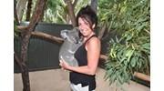 Love this little Koala