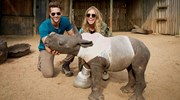Feeding time at the Care For Wild Rhino Sanctuary.